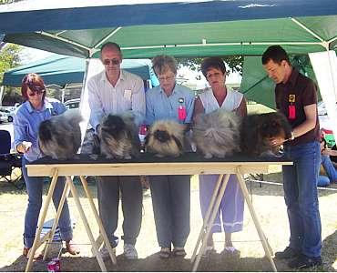 Ring Steward Dog Show